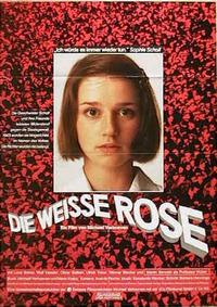 Bild Die weiße Rose