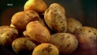 Bild Kartoffelgeschichten - Eine Knolle erobert die Welt