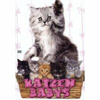 Bild Katzenbabys
