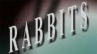 Bild Rabbits