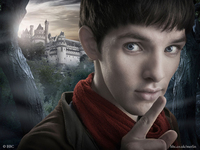 Bild Merlin