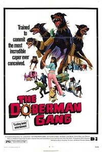 Bild Doberman Gang