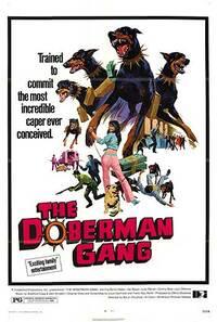Bild Doberman Gang