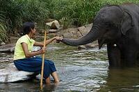 Bild Chandani und ihr Elefant