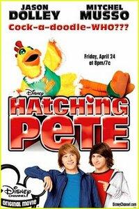 Bild Hatching Pete