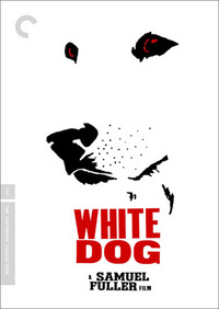 Bild White Dog