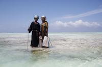 Bild Über den Inseln Afrikas - Sansibar