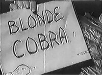 Bild Blonde Cobra