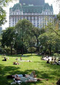 Bild Central Park