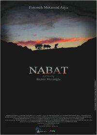 Bild Nabat