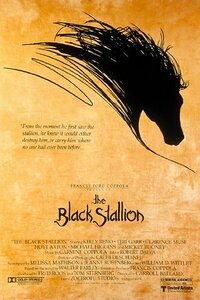 Bild The Black Stallion