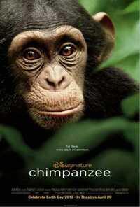 Bild Chimpanzee