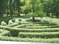 Bild Maze