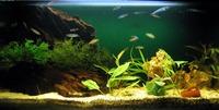 Bild Aquarium