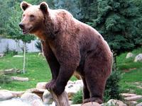 Bild Bear