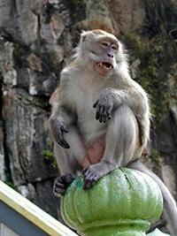 Bild Monkey