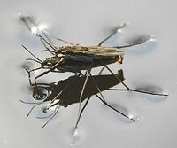 Bild Insect