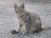 Bild Cat