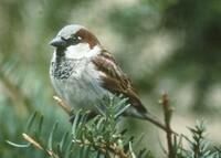 image Bird