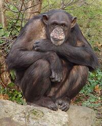 image Chimp