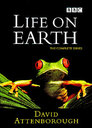 Life on Earth > The Conquest of the Waters