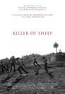 Schafe töten