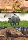 The Big Five of Asia > Der Amur-Tiger